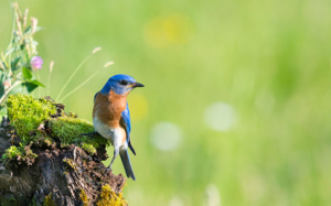 EU Biodiversity Strategy to bring nature back into our lives